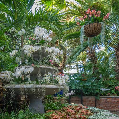 This Week at Phipps: Feb. 8 – 14