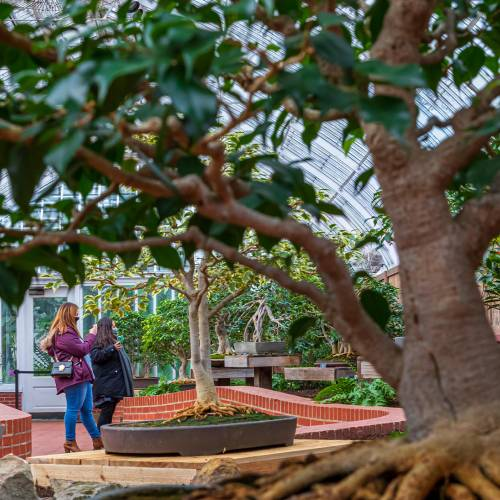 This Week at Phipps: Feb. 15 – 21