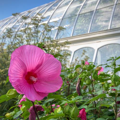 This Week at Phipps: Aug. 24 – 30