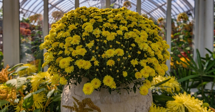 This Week at Phipps: Nov. 4 – Nov. 10