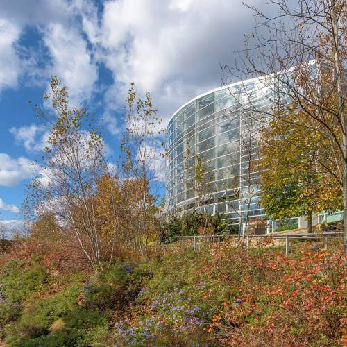 This Week at Phipps: Nov. 11 – Nov. 17