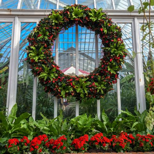 This Week at Phipps: Nov. 23 – 29