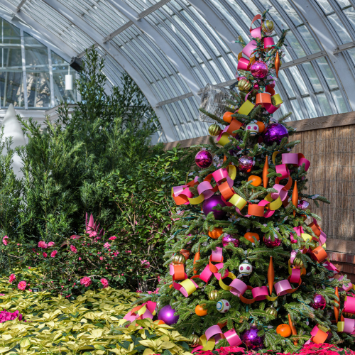 This Week at Phipps: Dec. 14 – 20