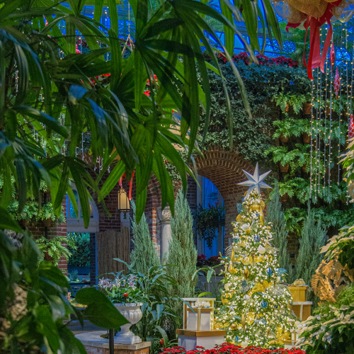This Week at Phipps: Dec. 21 – 27