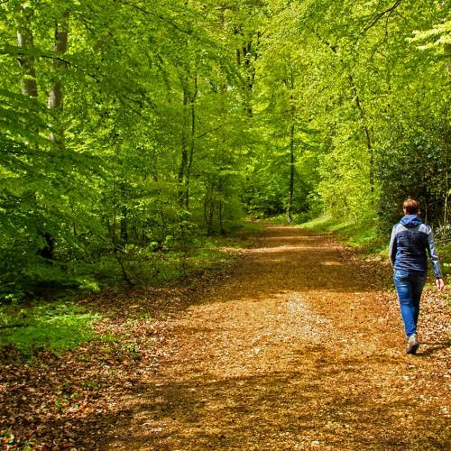 The Biophilic Mind: A Walk in the Park to Reduce Rumination