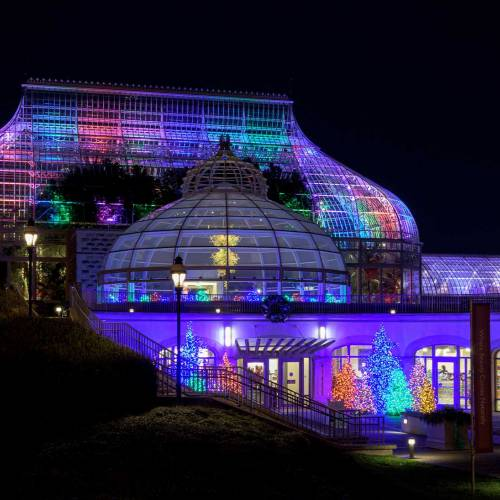 The Night Before Winter Show: A Phipps Story