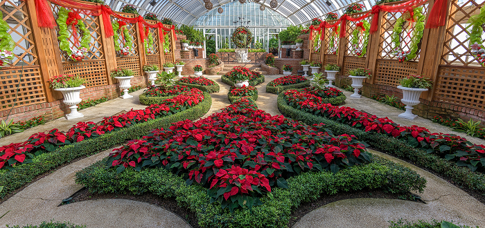 Winter Flower Show: Home for the Holidays