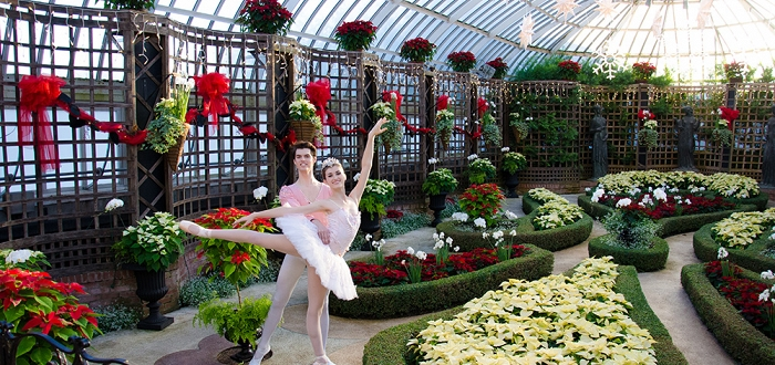 Poinsettias and Pointe Shoes