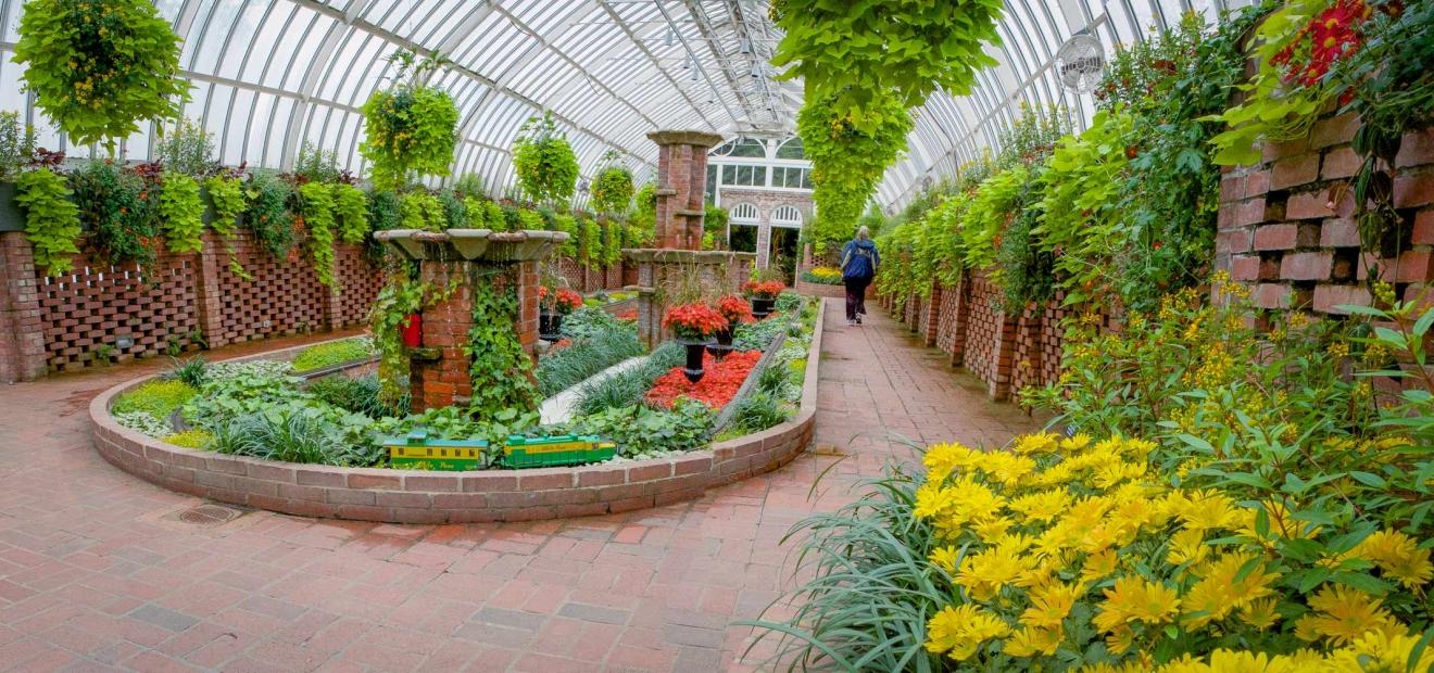 Prunus  cistena  Plant Finder  Missouri Botanical Garden