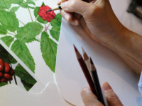 Botanical Art and Illustration
