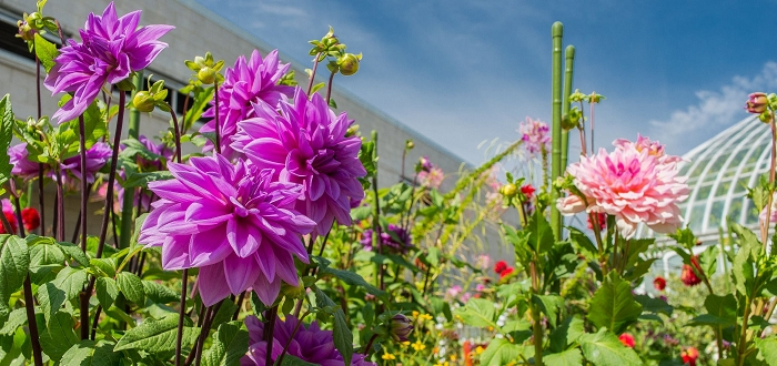 september public programs phipps conservatory and botanical