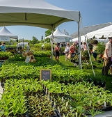 May Market and National Public Gardens Day