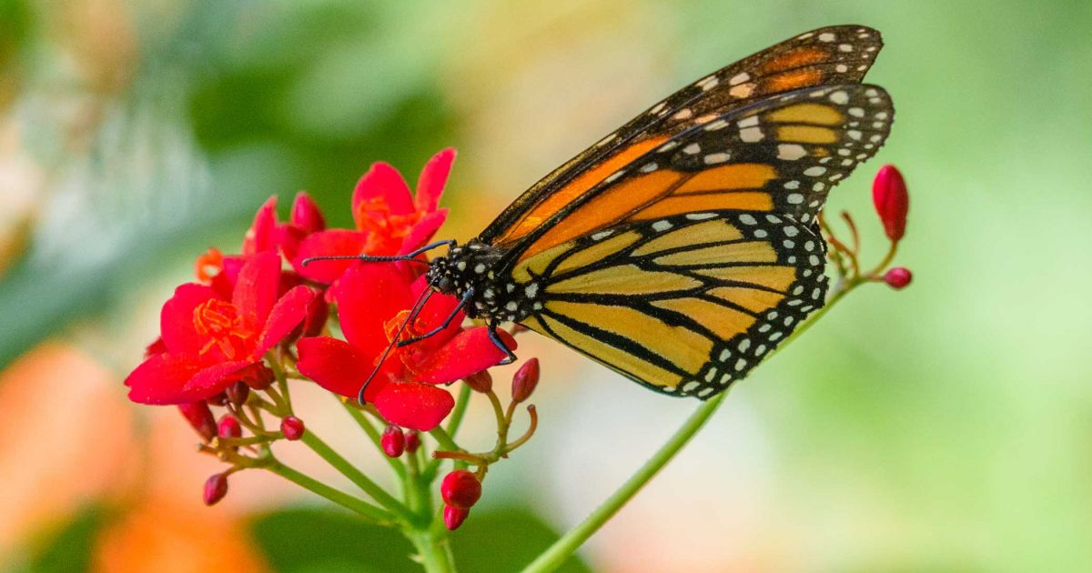 Eco Friendly Pest Management Guide Phipps Conservatory