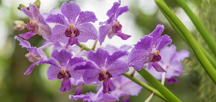 Used Orchid Sale